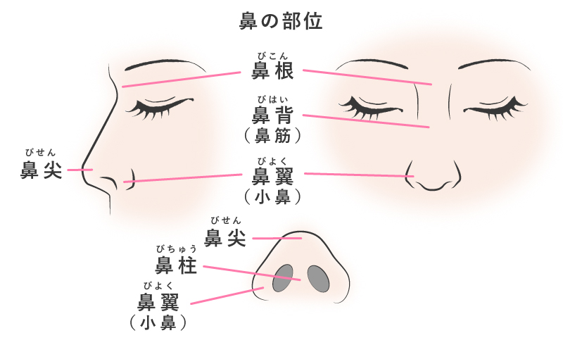 鼻の部位説明