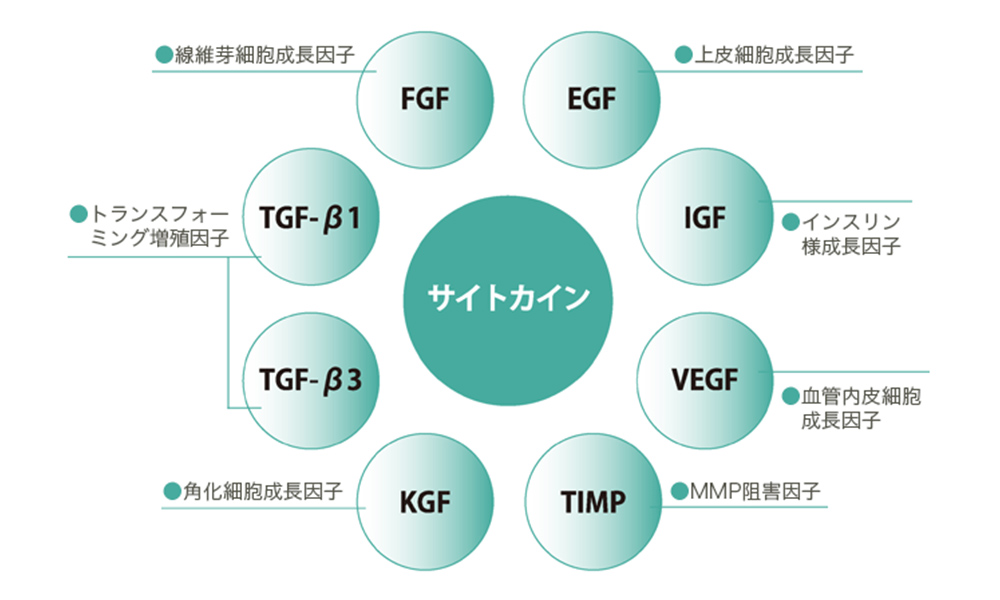 ヒト骨髄幹細胞|大阪美容クリニック,プライベートスキン ...