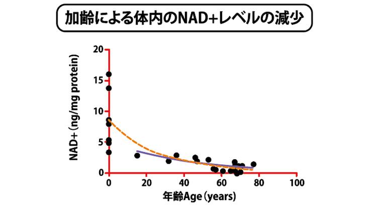 加齢による体内のNAD+レベルの減少